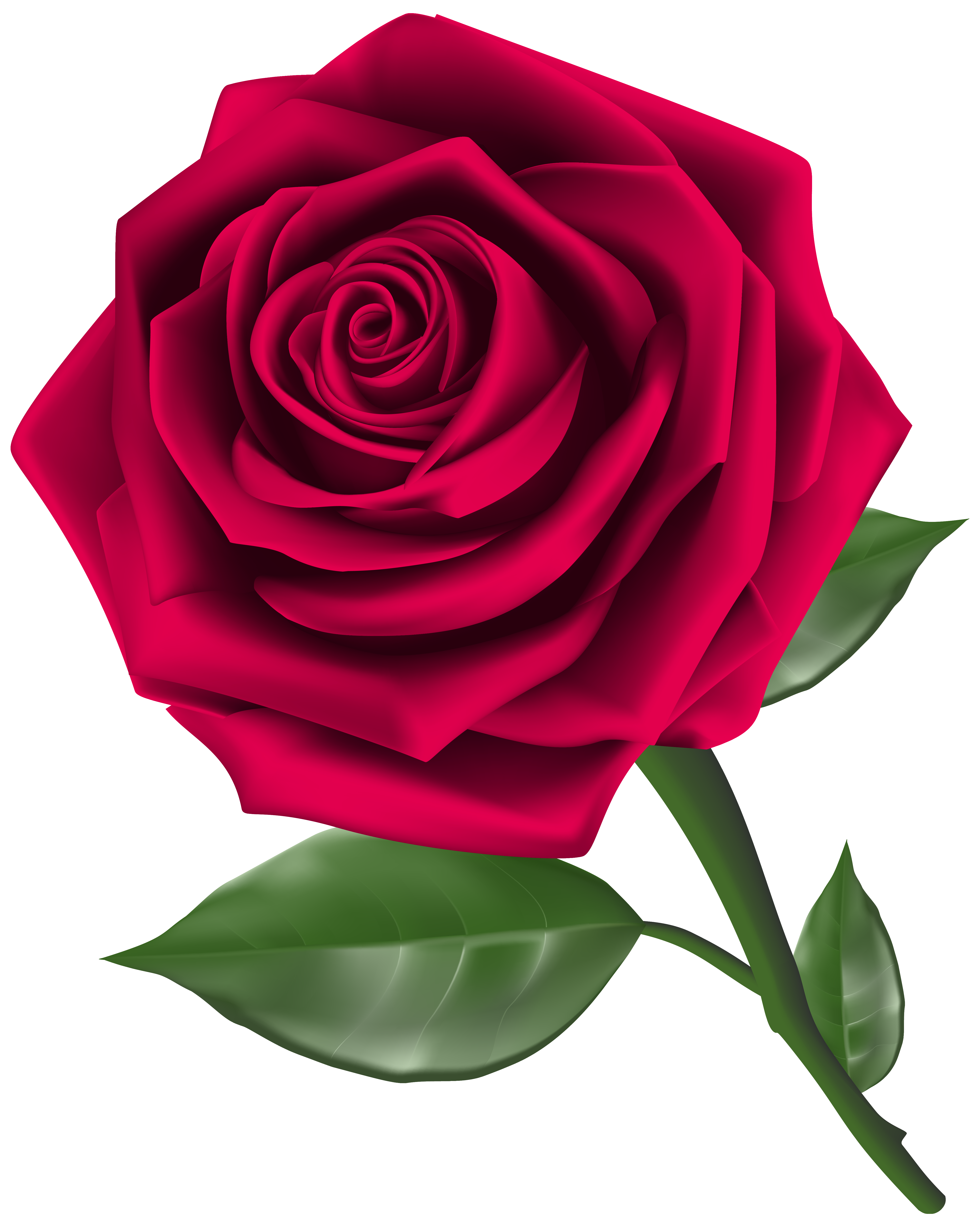 5001x6261 Roses Steam Rose Clipart Image