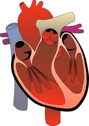 300x425 Heart Attack Clip Art