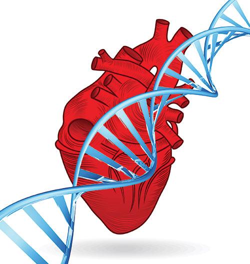 500x528 Medicinal Clipart Heart Disease