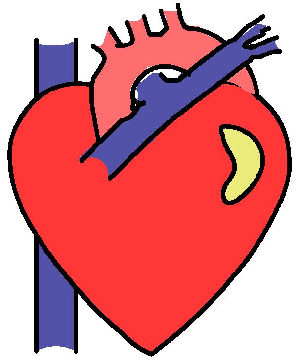 605x734 Anatomy Clipart Anatomical Heart