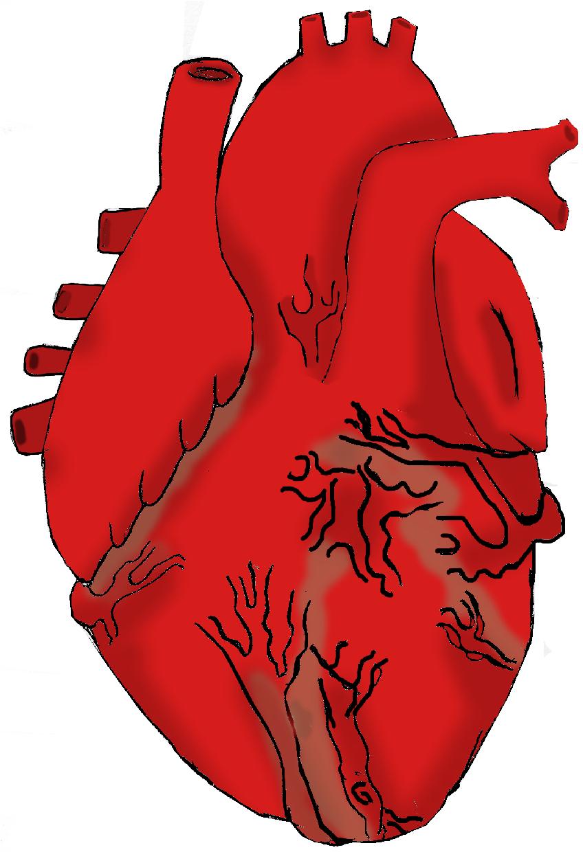 848x1240 Real Heart Cartoon