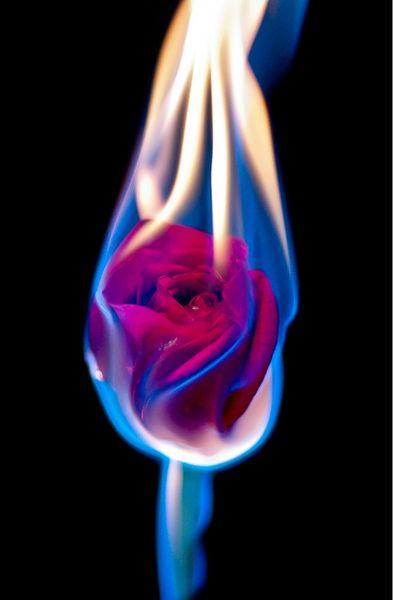 393x600 40 Best Fire Images Beautiful Flowers, Beautiful