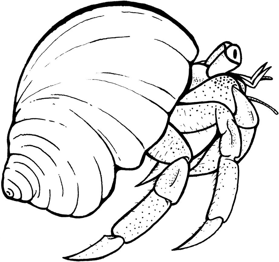 922x866 Crab Black And White Hermit Crab Clipart Black And White