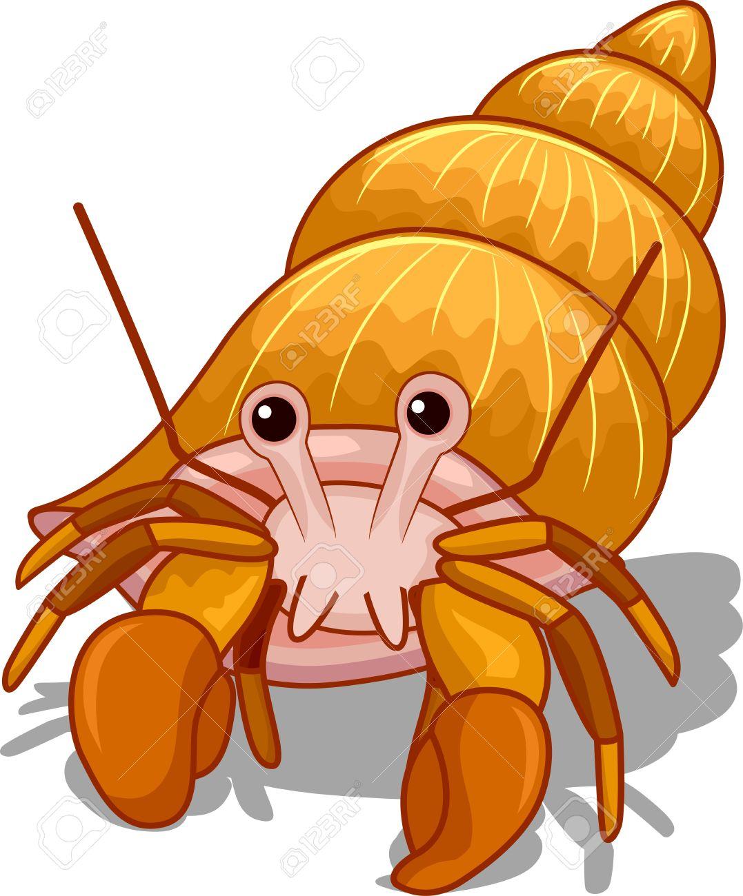 1077x1300 Crab Clipart Hermit Crab