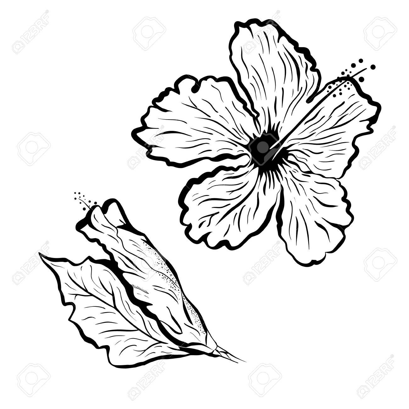 Hibiscus Tattoo Outline