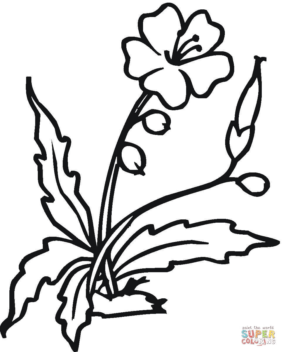 962x1200 Hibiscus Coloring Pages Free Coloring Pages
