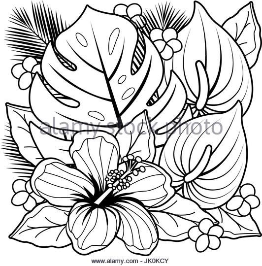 532x540 Hibiscus Vector Stock Photos Amp Hibiscus Vector Stock Images