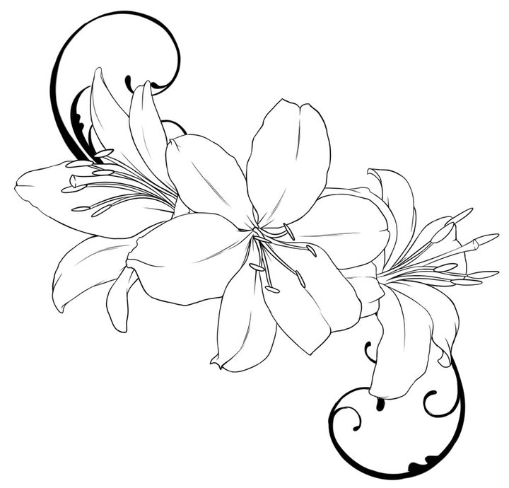 hibiscus outline free download best hibiscus outline on clipartmag com
