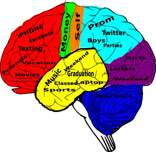 600x585 High School On The Brain Clip Art
