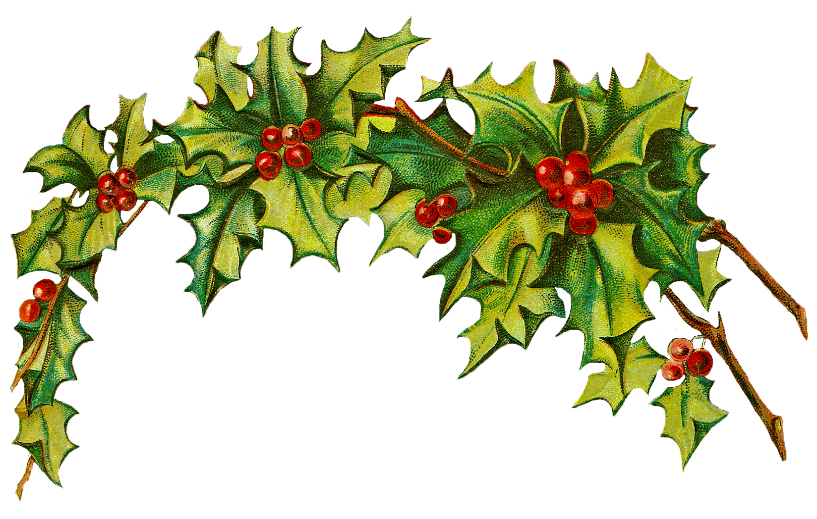1648x1048 Clipart Christmas Holly Clipart Panda