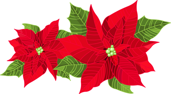 600x332 Poinsettia Clipart Greenery