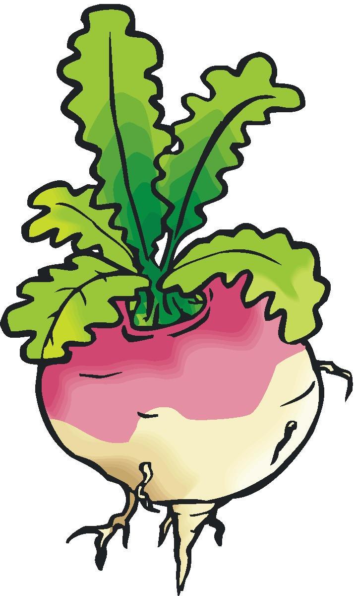 716x1200 Turnip Beet Clipart Free Download Clip Art