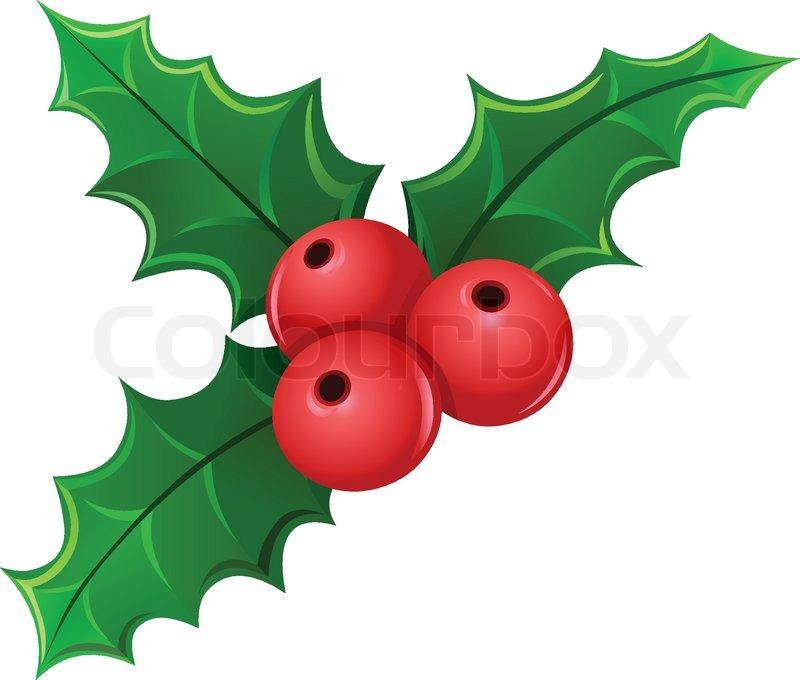 800x680 Christmas Holly Berry Mistletoe Stock Vector Colourbox