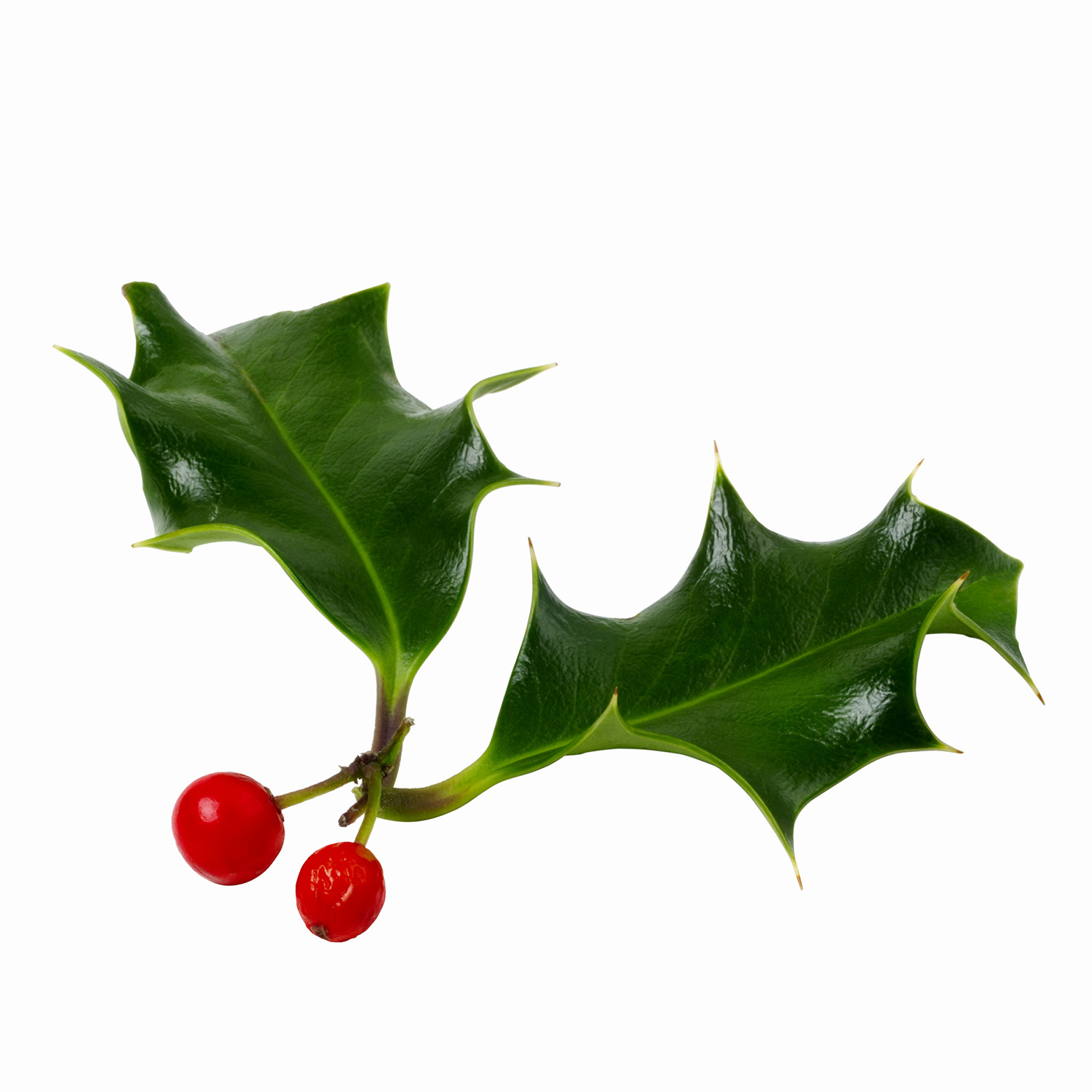 1500x1500 Happy Holly Day! Holidailys Holidays Every Day Of The Year Is
