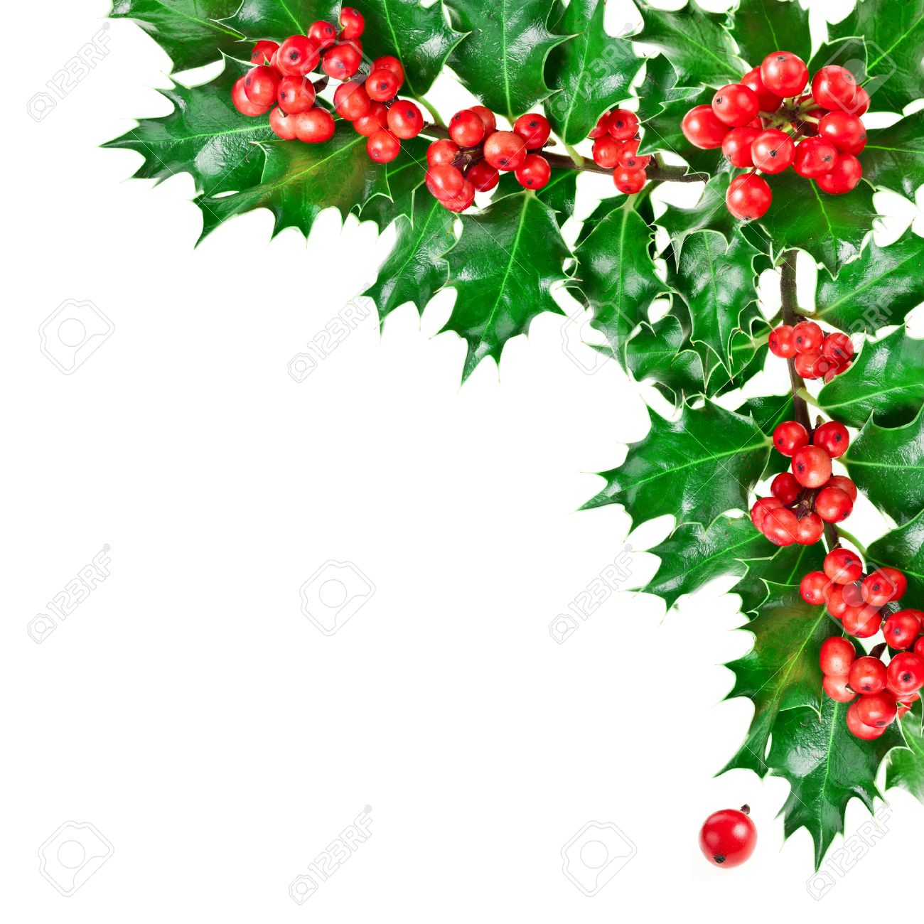 1300x1300 Holly Corner Images Amp Stock Pictures. Royalty Free Holly Corner