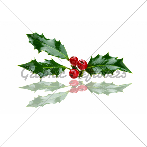 500x500 Holly Leaves Holly Berries, Public Domain And Berries