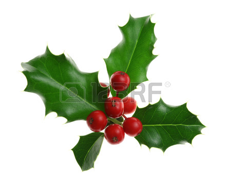 450x361 Sprig Holly Images Amp Stock Pictures. Royalty Free Sprig