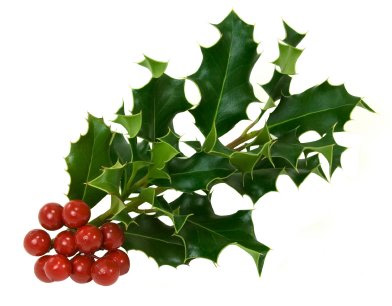 392x306 What Is Holly The Official Intermistletoe Gide To Holly
