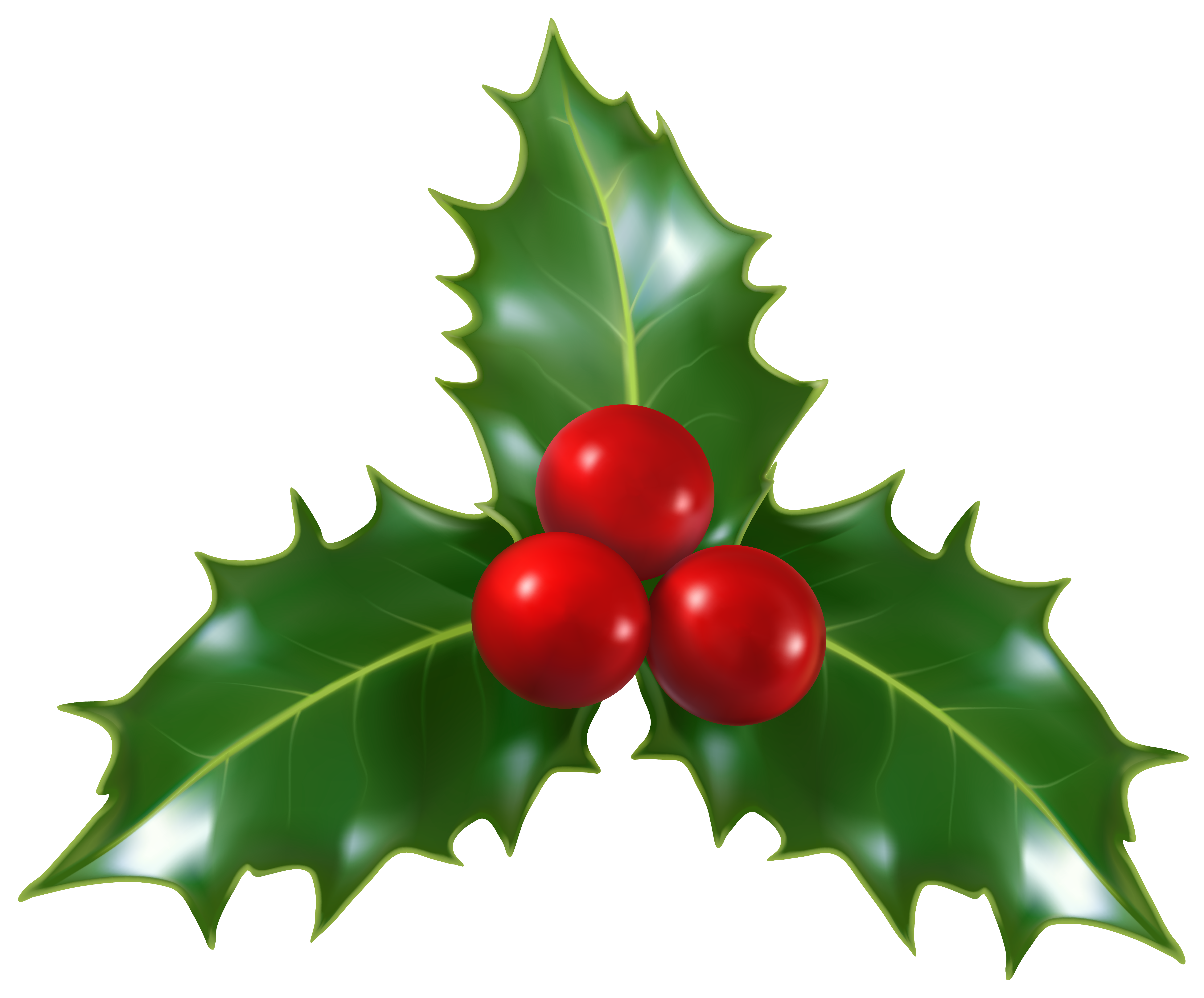 6313x5231 Christmas Holly Mistletoe Png Clip Art Imageu200b Gallery