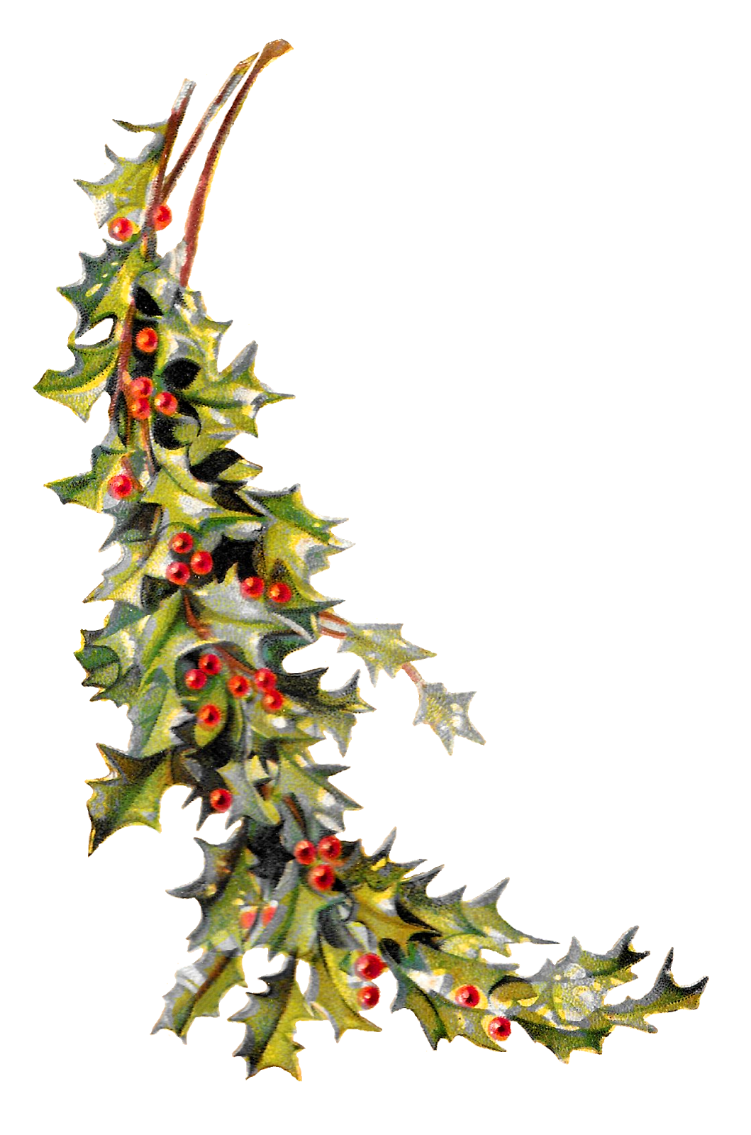 1059x1600 Antique Images Free Christmas Holly Image Holiday Clip Art