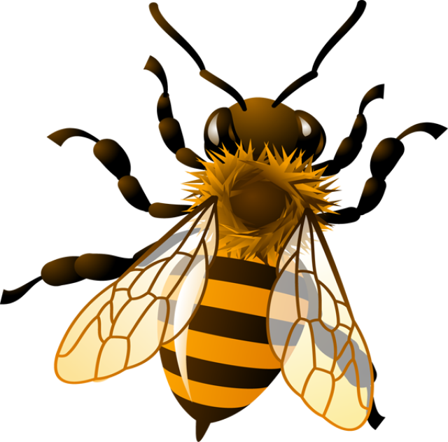 640x631 Animal Honey Bee Clipart
