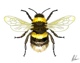 340x270 Bee Illustration Etsy
