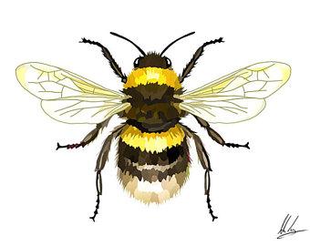 340x270 Bee Illustration Etsy