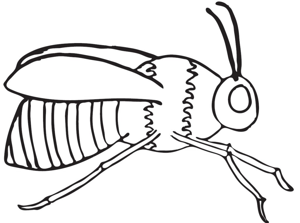 1024x761 6 Plain Bee Coloring Page