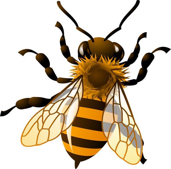 600x592 Drawing Clipart Bee
