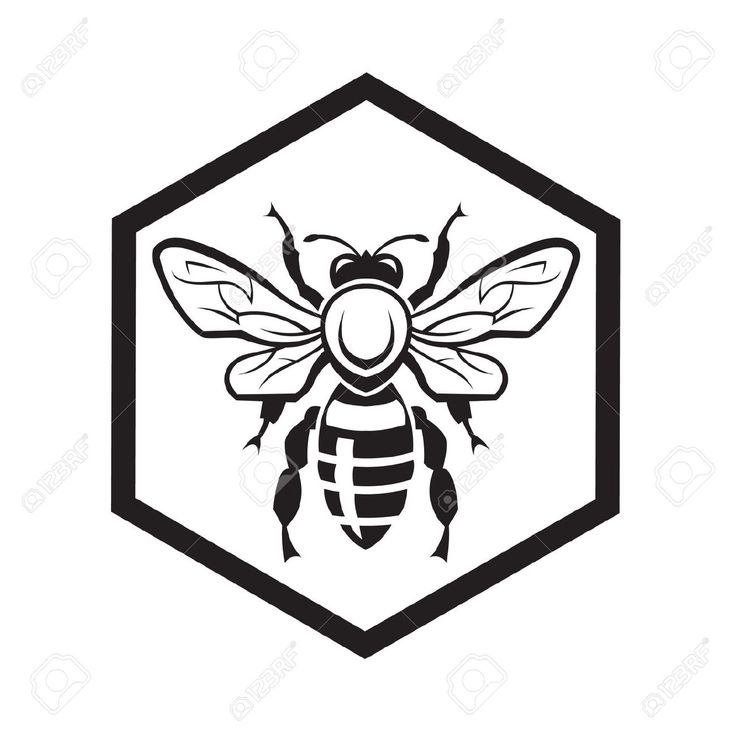 736x736 Drawn Bee Bee Honeycomb