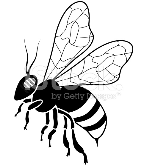 494x556 Drawn Bee Vector