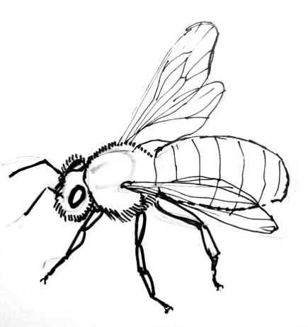 435x461 Drawn Bees Honey Bee