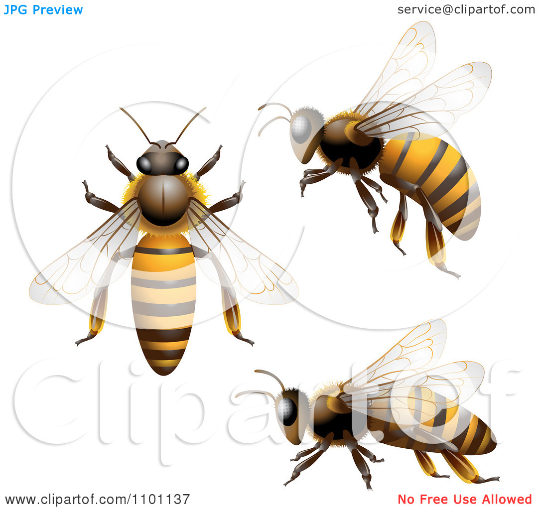 1080x1024 Flying Honey Bee Clipart