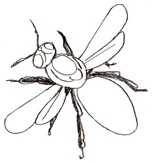 300x319 How To Draw A Honey Bee