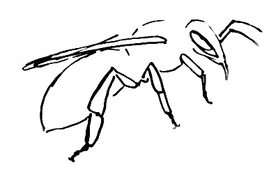 399x250 How To Draw A Honeybee
