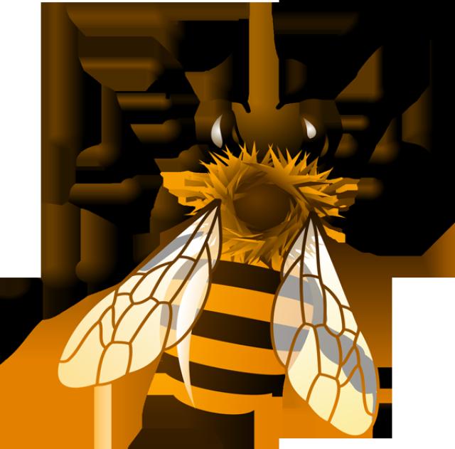 640x631 Honeybee Clipart