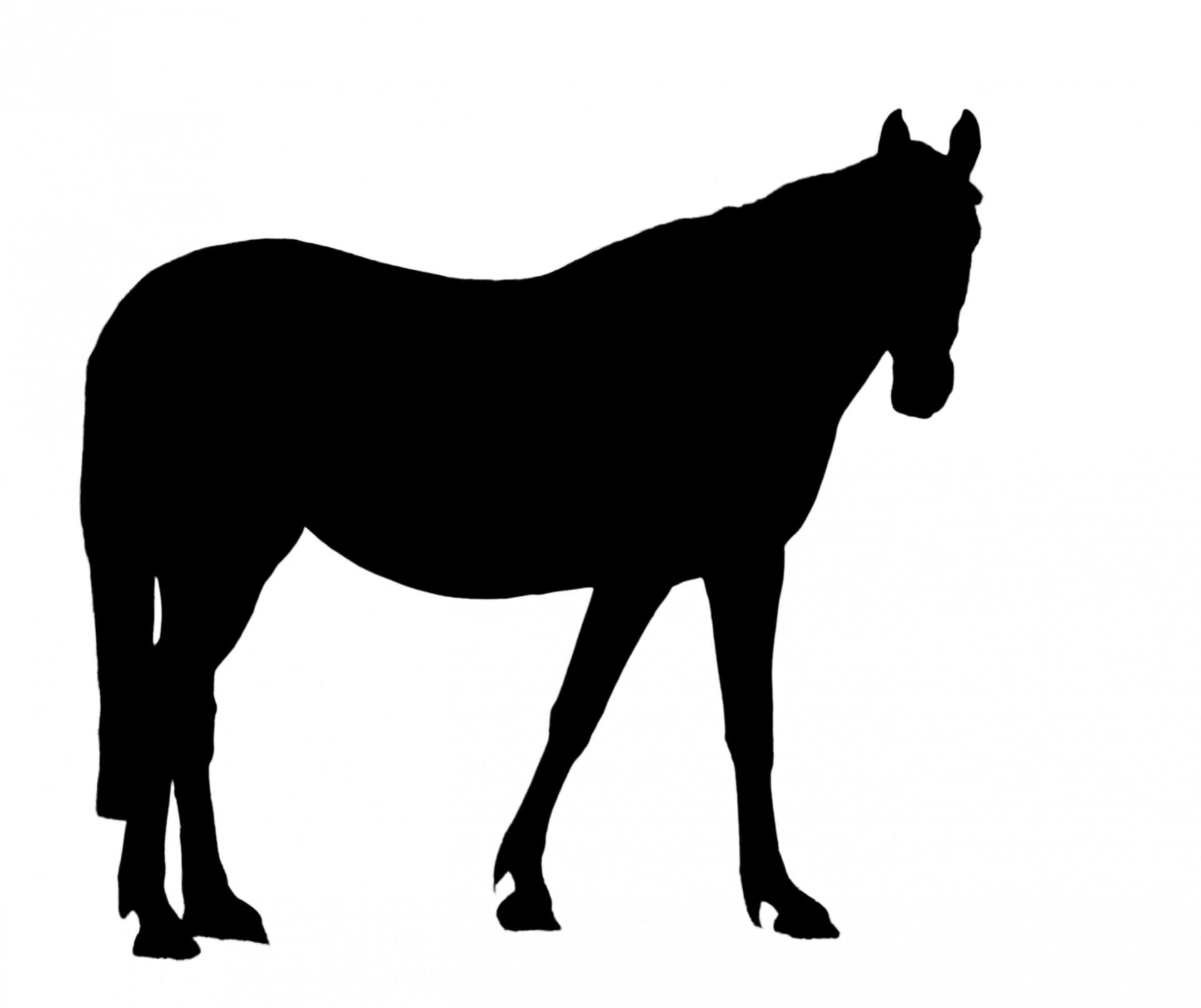 1920x1612 Black Horse Clipart, Explore Pictures