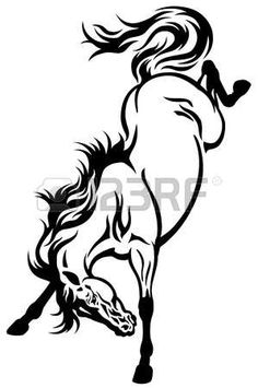 236x355 Closeup Portrait Of White Horse With Black Background Stock Photo