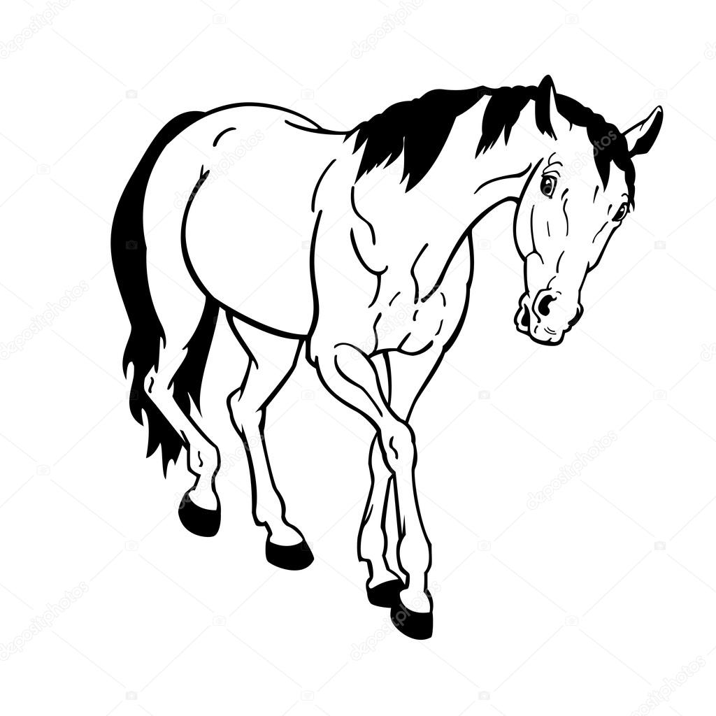 1024x1024 Horse Black White Isolated Stock Vector Insima