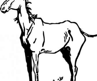 336x280 Black And White Horse Vector Vector Misc Free Vector Free Download