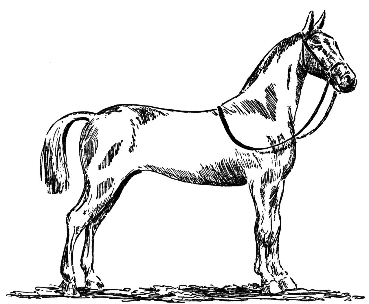 Horse Coloring Pages Free download