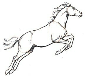 293x261 Horse Jumping Sketch Sketching Ideas Sketches