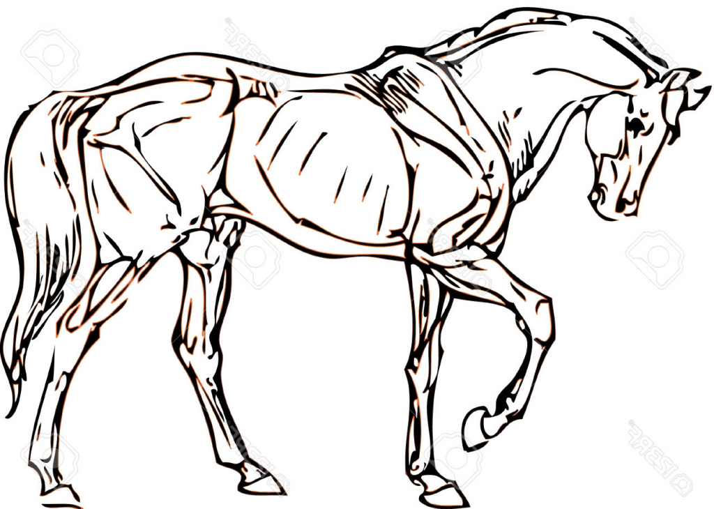 1024x730 Simple Drawing Of A Horse Horse Easy Drawing How To Draw A Horse