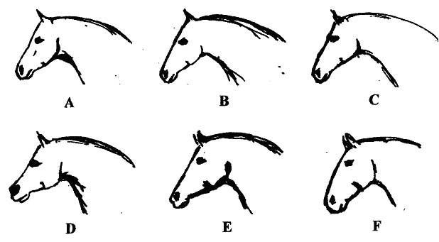 618x341 Drawn Profile Horse Head