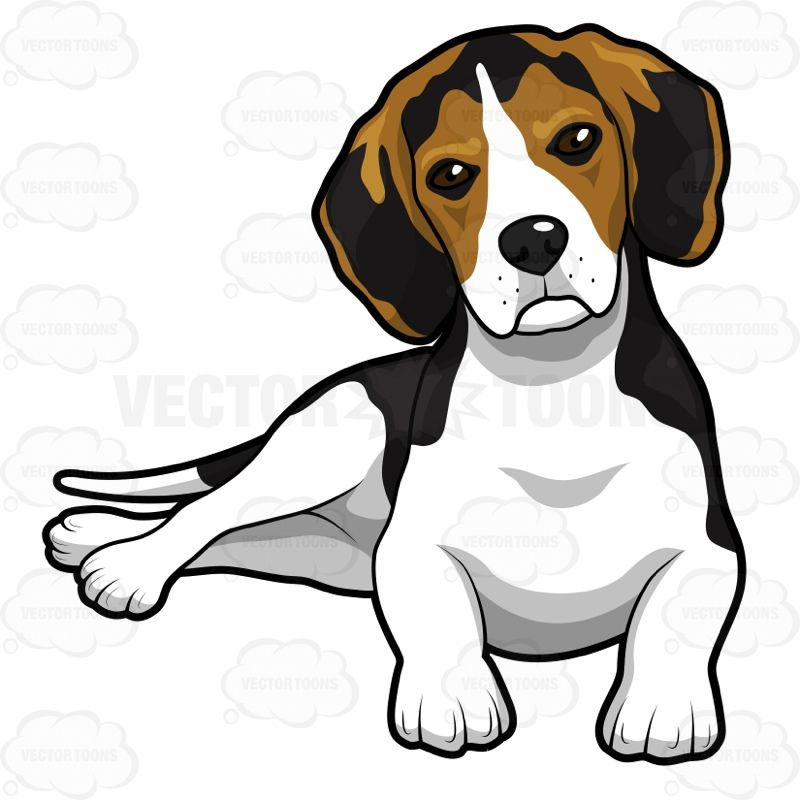 800x800 Cute Beagle Puppy Lying Down Vector Clipart And Beagle