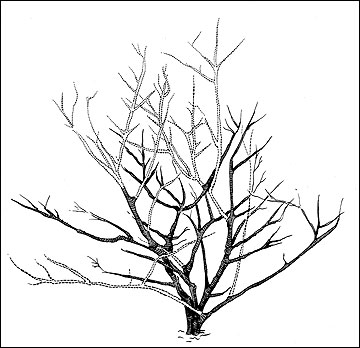 360x348 Naked Shrub How To Draw Realistic Trees, Plants Bushes And Rocks