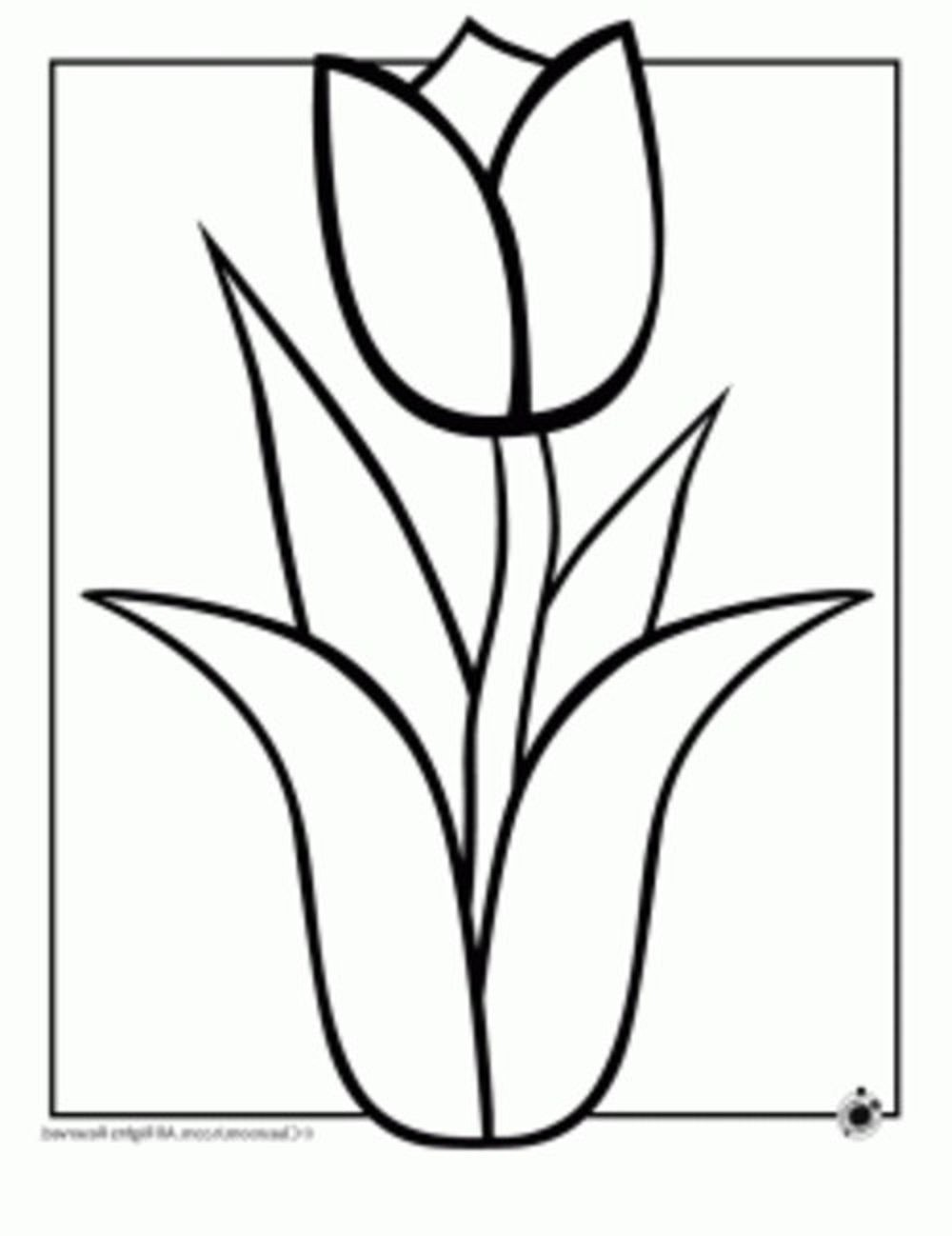 How to draw a hawaiian flower free download best how to draw a 1000x1298 print amp download izmirmasajfo
