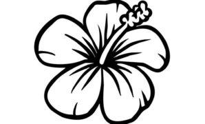 298x180 Hawaiian Flower To Draw