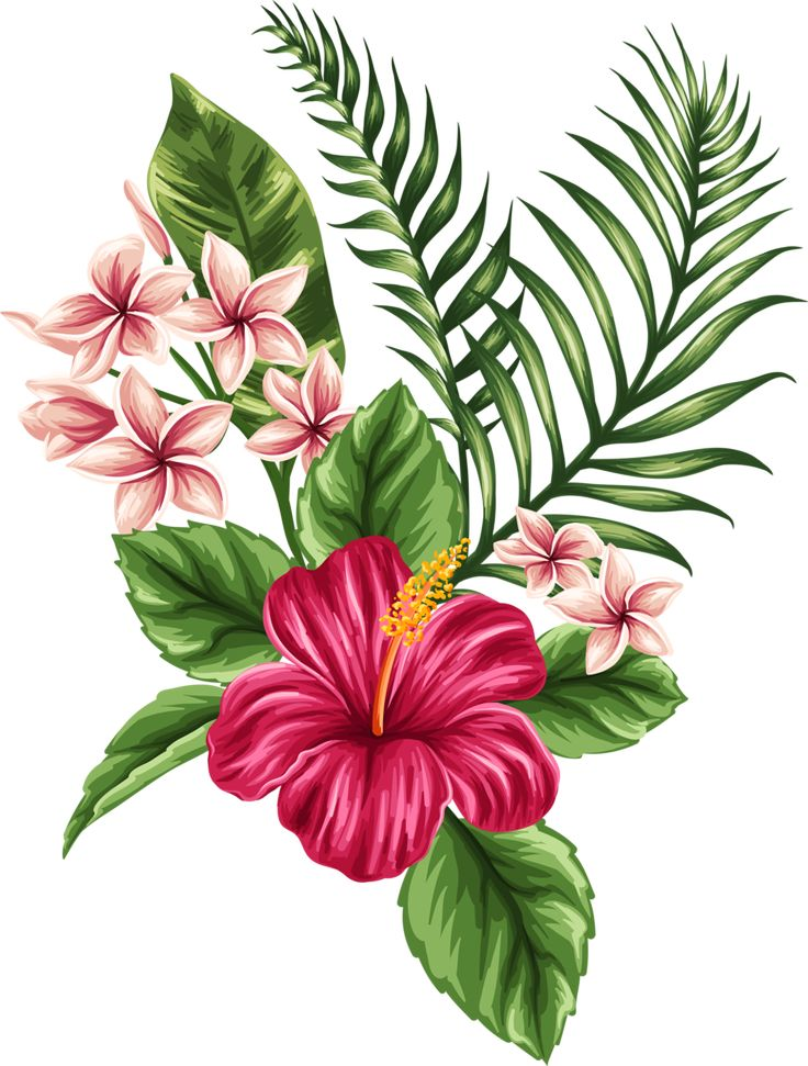 Hibiscus Flower Drawing: How To Draw A Hawaiian Flower