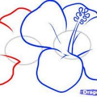 200x200 Drawings Of Hawaiian Flowers